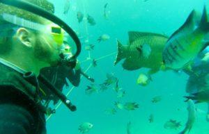 Great Barrier Reef Unterwasser