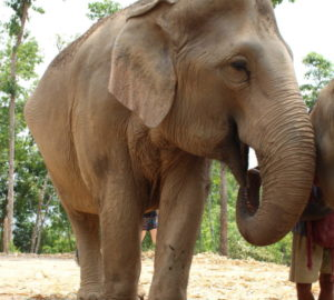 Elefantencamp Chiang Mai