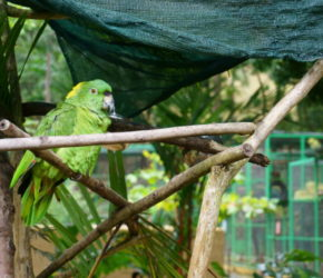 Papagei im Sanctuary