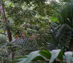 Affenherde nahe eines Restaurants