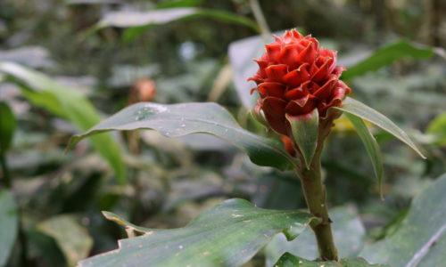 Flora in Monteverde