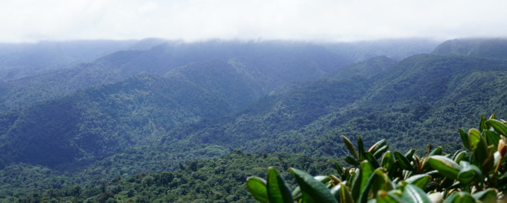 Santa Elena Cloud Forest