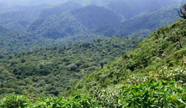 Aussicht Monte Verde Cloud Forrest