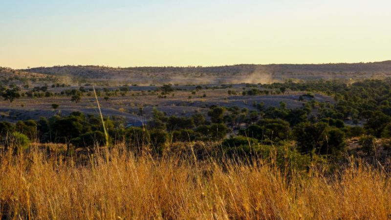 Kalahari Wüste