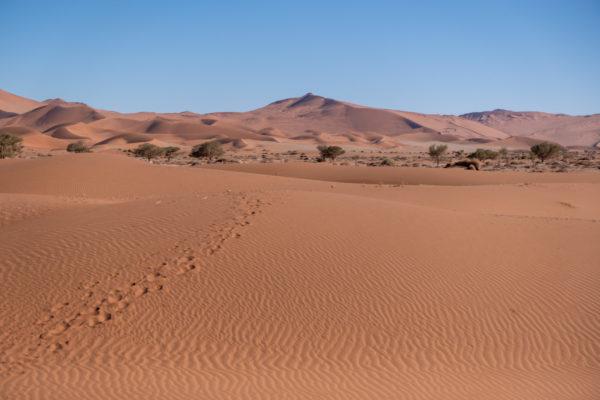 Namibia Reiseroute für 21 Tage