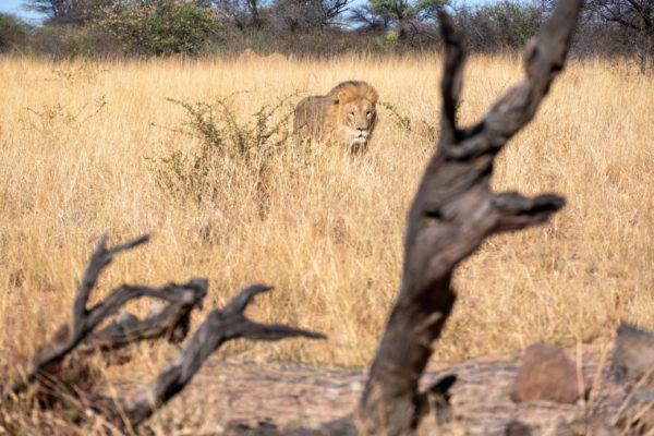 Namibia Selbstfahrer Route